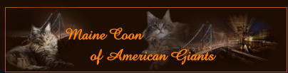Maine Coon        of American Giants