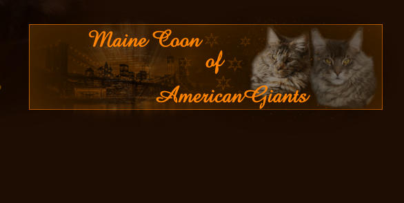 Maine Coon   AmericanGiants of